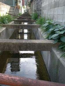 昨日の雨で潤う
